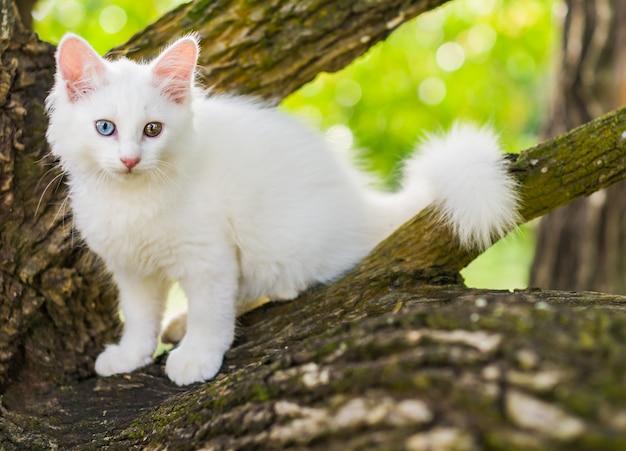 Carino gatto bianco su un albero.