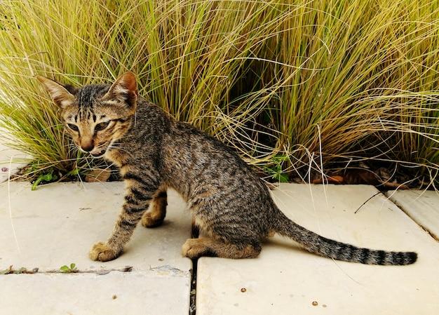 Carino gatto di strada