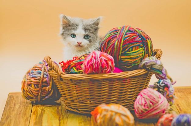 Carino gatto lanuginoso sta giocando con la palla di lavoro a maglia.