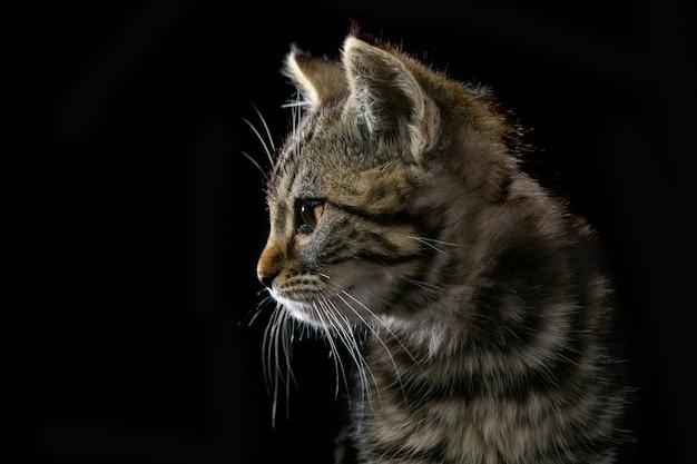 Carino piccolo gattino isolato su sfondo nero