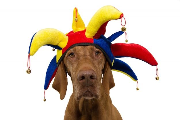 Carnevale divertente del cane isolato su bianco