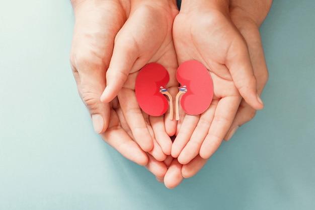 Carta a forma di rene della tenuta del bambino e dell'adulto, giornata mondiale del rene, festa dei donatori dell'organo nazionale, concetto di donazione di carità