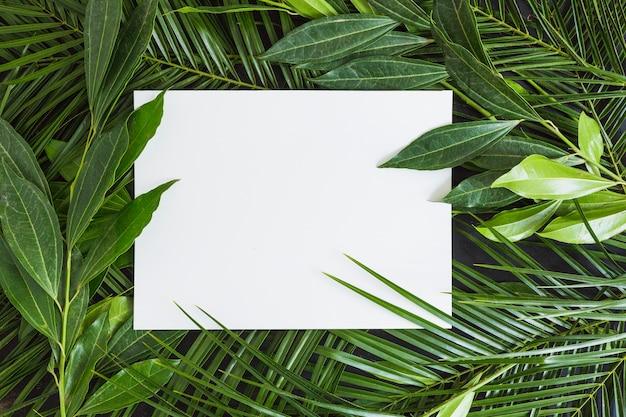 Carta bianca su sfondo di foglie verdi