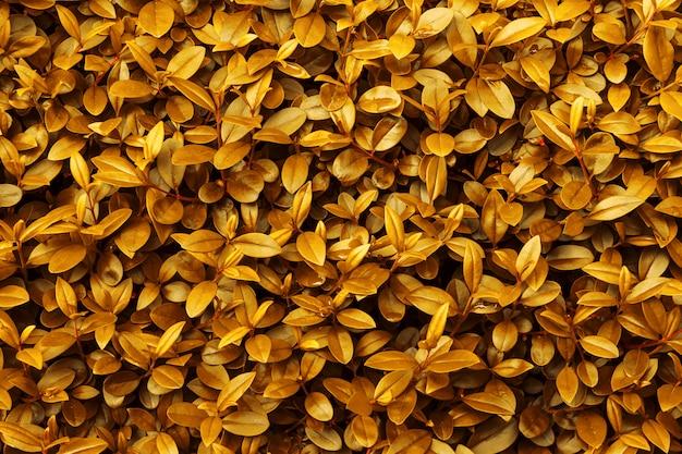 Carta da parati dorata giallo arancione del modello del fogliame del fondo di caduta di autunno