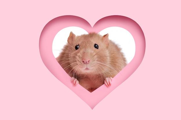 Carta di san valentino con cornice a cuore e un topo guardando fuori di esso