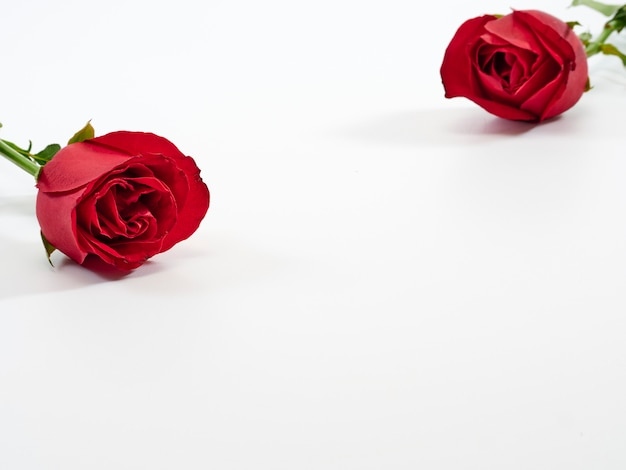 Carta di san valentino. due rose rosse.