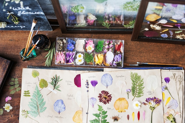 Carte che mostrano raccolta asciutta dei fiori e delle foglie