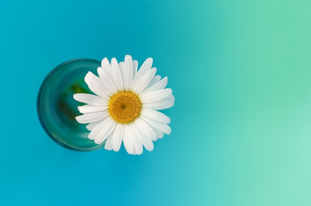 Cartolina con camomilla in un bicchiere con acqua sul lato sinistro dell'immagine
