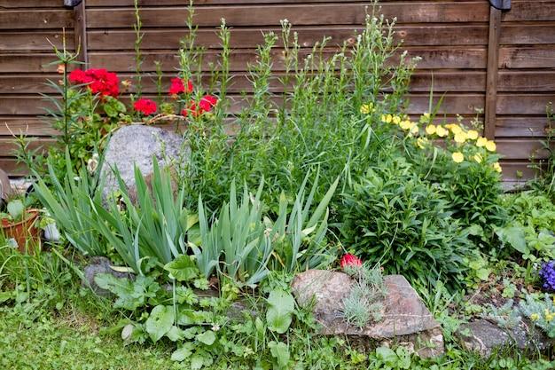 Casa con gigli, rose, aster e altri fiori