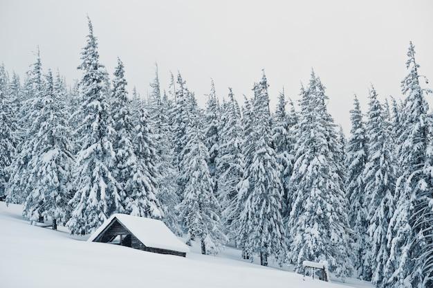 Casa in legno a pini coperti di neve sulla montagna chomiak, splendidi paesaggi invernali dei carpazi, ucraina, natura gelo,