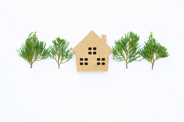 Casa miniatura con le foglie del ginepro del drago (juniperus chinensis) su bianco