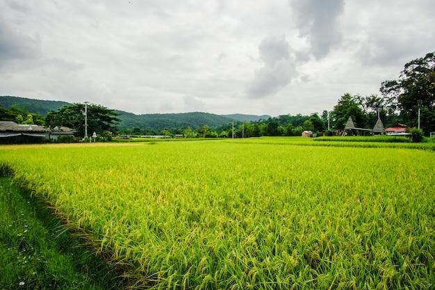 Casa nel mezzo del paesaggio verde, natura all'aperto