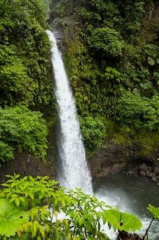 Cascata di fortuna della la in foresta tropicale alla costa rica