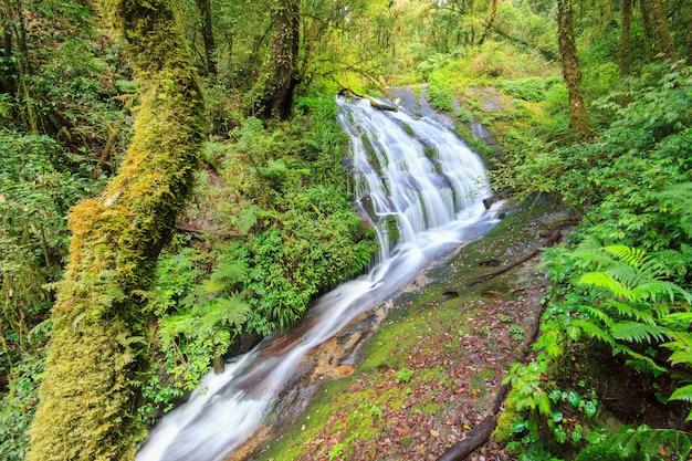 Cascata nella foresta sempreverde della collina di doi inthanon, chiang mai, tailandia