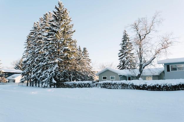 Case con alberi di pino in inverno