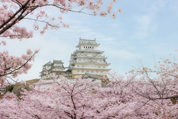 Castello di himeji con bellissimo fiore di ciliegio nella stagione primaverile a hyogo vicino a osaka, in giappone.