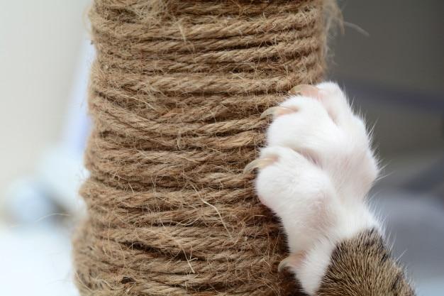 Cat scratching.claws sul tiragraffi