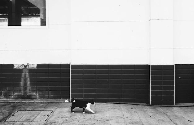 Cat walking city concept senza tetto