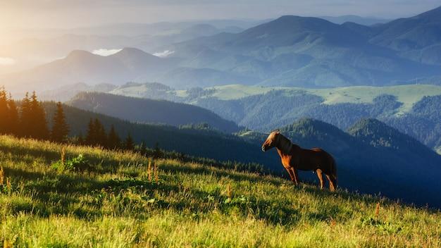Cavalcando in montagna al tramonto mondo della bellezza