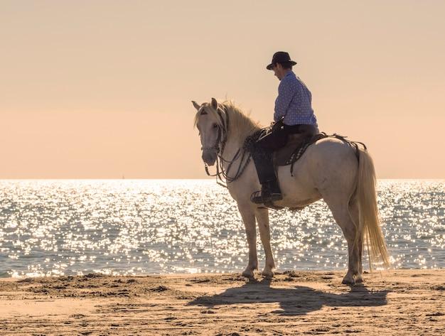 Cavaliere sulla spiaggia
