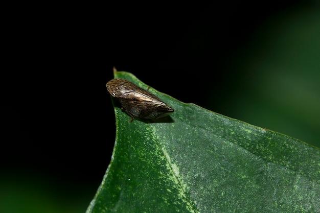 Cavallette su foglie verdi