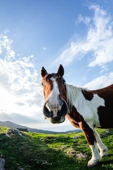 Cavalli con facce buffe e curiose in libertà sulla montagna