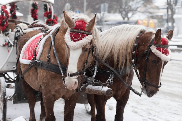 Cavalli e carrozze di natale decorati.