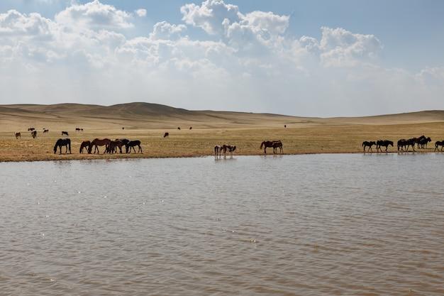 Cavalli e mucche pascolano nei pressi di uno stagno, la mongolia interna, in cina