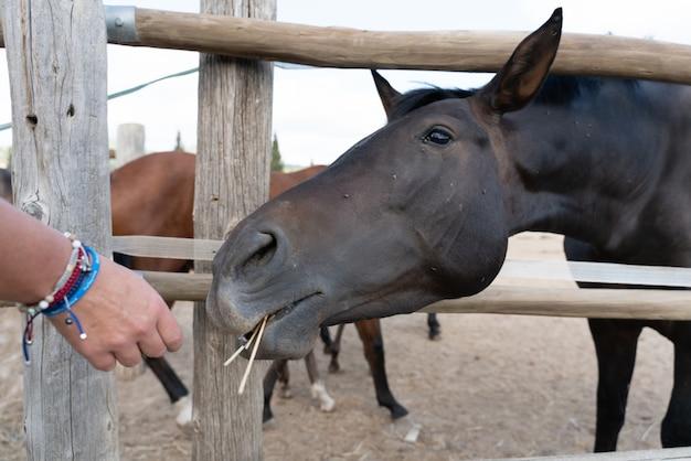 Cavalli in una stalla all'aperto