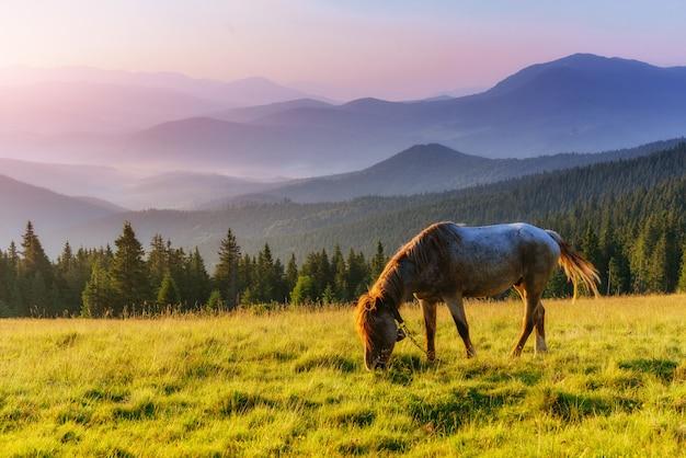 Cavalli sull'erba al pascolo d'altura