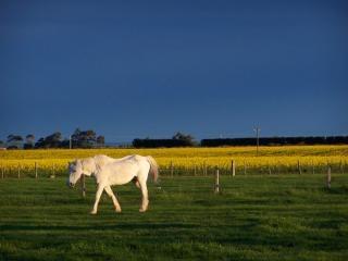 Cavallo bianco e stupro