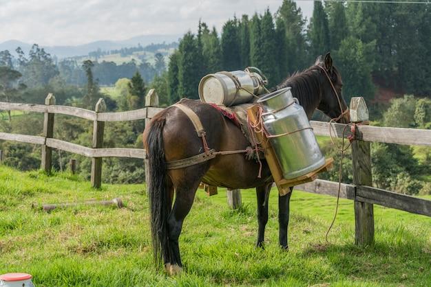 Cavallo che trasporta latte di mucca