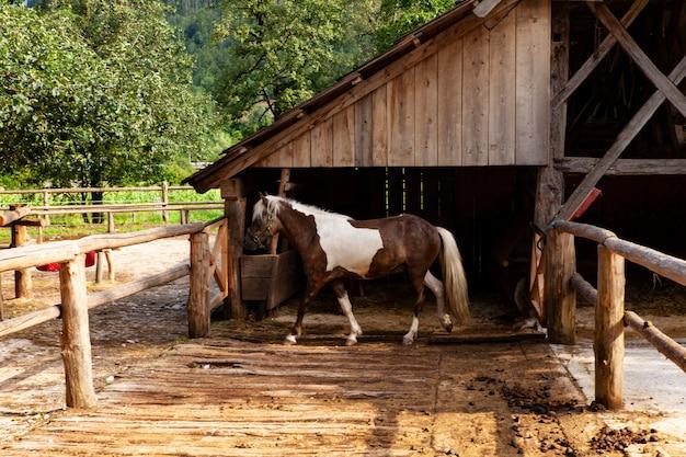 Cavallo chiazzato fuori dal fienile