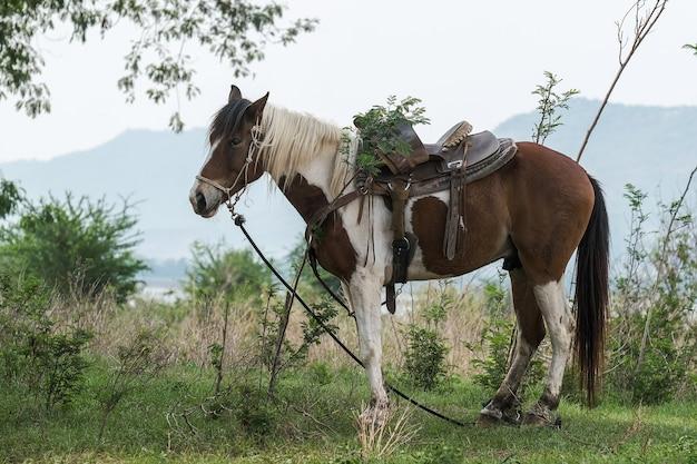 Cavallo da cowboy con prati e montagne