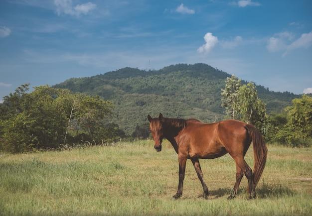 Cavallo di colore marrone che si rilassa nella superficie a pascolo.