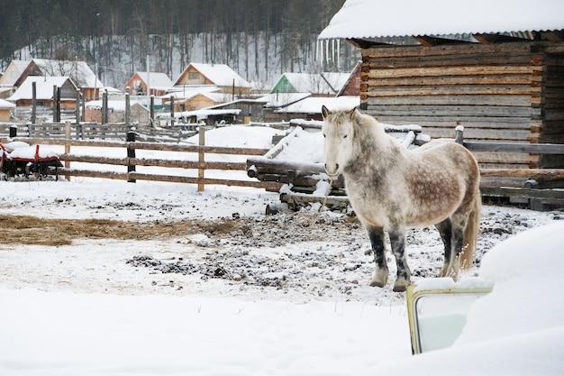 Cavallo grigio in stalla
