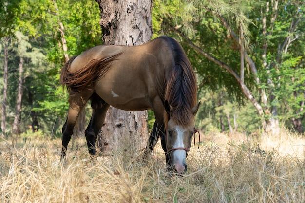 Cavallo marrone che mangia erba