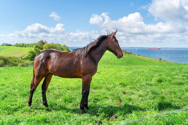Cavallo marrone in piedi sul pascolo verde