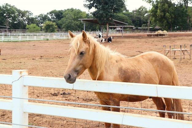 Cavallo nella fattoria