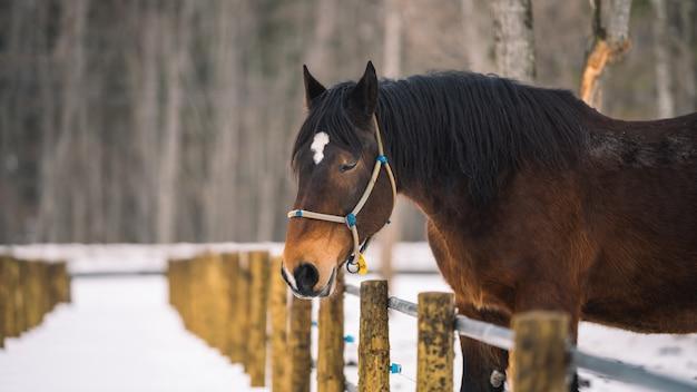 Cavallo nella stalla