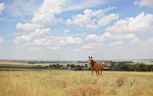 Cavallo rosso con la criniera lunga nel giacimento di fiore contro il cielo