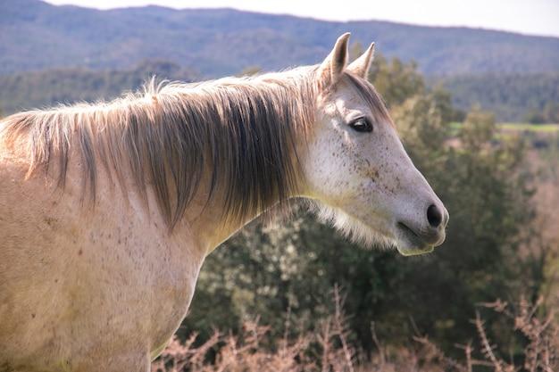 Cavallo selvaggio e vecchio grigio con la criniera scura in natura durante la primavera con espressione facciale rilassata