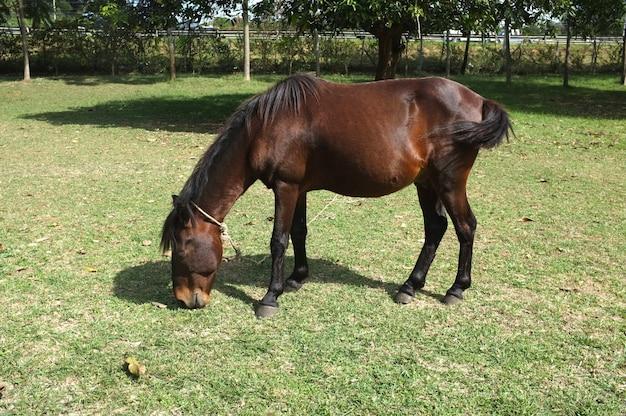 Cavallo sull'erba