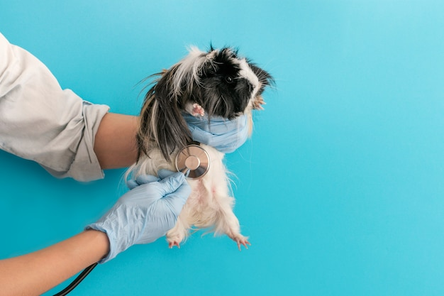 Cavia alla reception di un veterinario