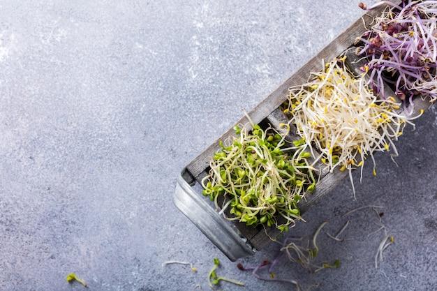 Cavoletti di verdure assortiti