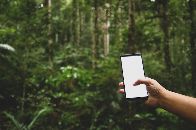 Cellulare nella foresta, non c'è contatto.