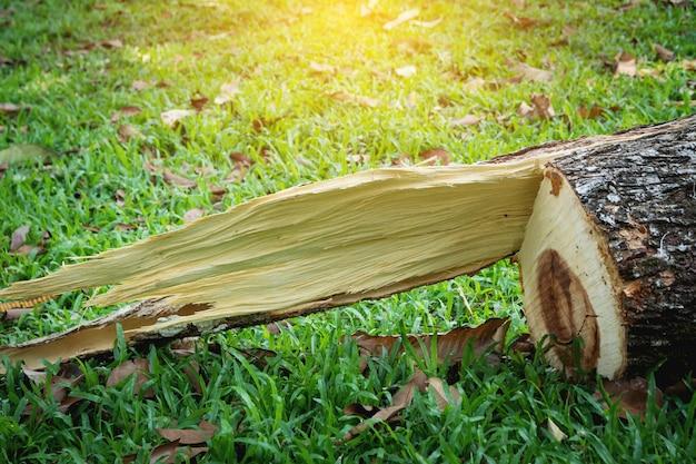 Ceppo di albero dopo che un albero è stato abbattuto nel parco.