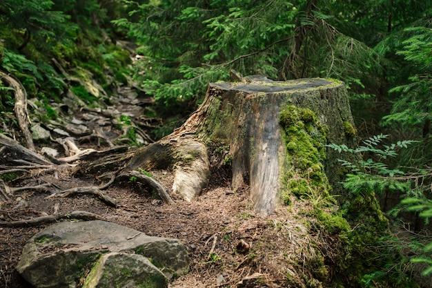 Ceppo di albero dopo la deforestazione