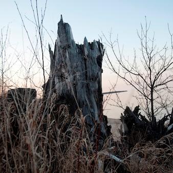 Ceppo di albero in gimli, manitoba, canada