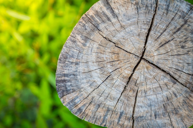 Ceppo di un albero